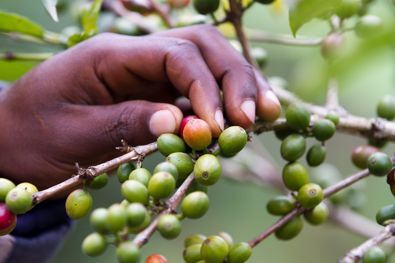 Meet the Woman Championing Kenya's Female Coffee Farmers