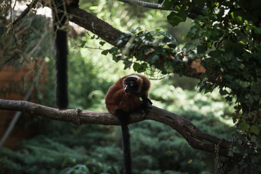 Weekend au Zoo de Beauval