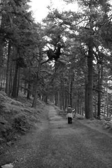Glendalough - 00044