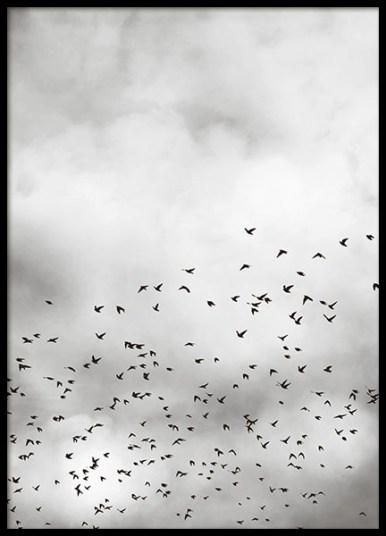 82578 SV Bird sky 50x70