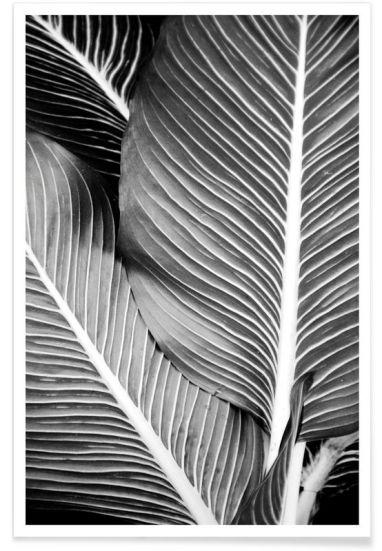affiches-plantes-deco -15