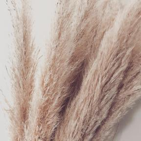 acheter herbe de la pampa (1)