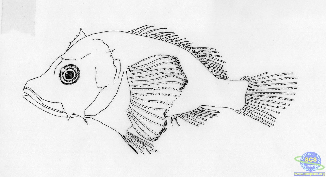 Fish Larvae Coloring Coloring Page Coloring Pages