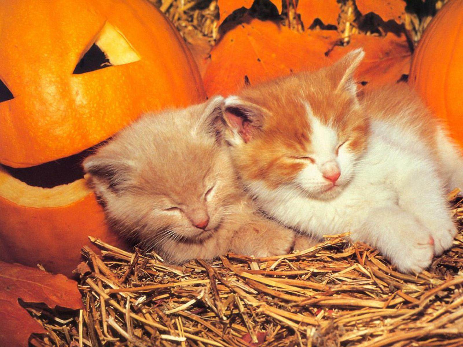 Fall In Maine Wallpaper 10 Grands Fonds D 233 Cran Pour De Petits Chatons Animaux