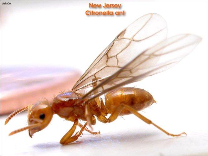 Flying Ants Queen Photos