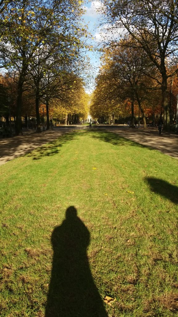 A photo of the tree-lined boulevard in the Royal Park - Brussels, Belgium