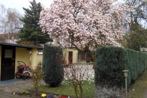 Schöne Blütenpracht, aber gefährlich: Pollenflug im Frühling. Foto: Petra Grünendahl