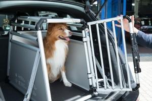Hundebox für den sicheren Transport. Foto: Allianz.