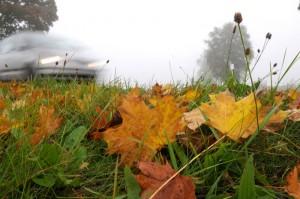 Herbstlaub. Foto: TÜV Süd.