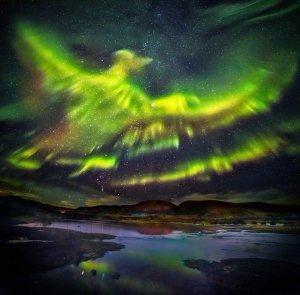 aurore_aigle