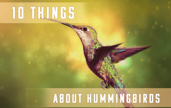 10 Things You Didn't Know About Hummingbirds