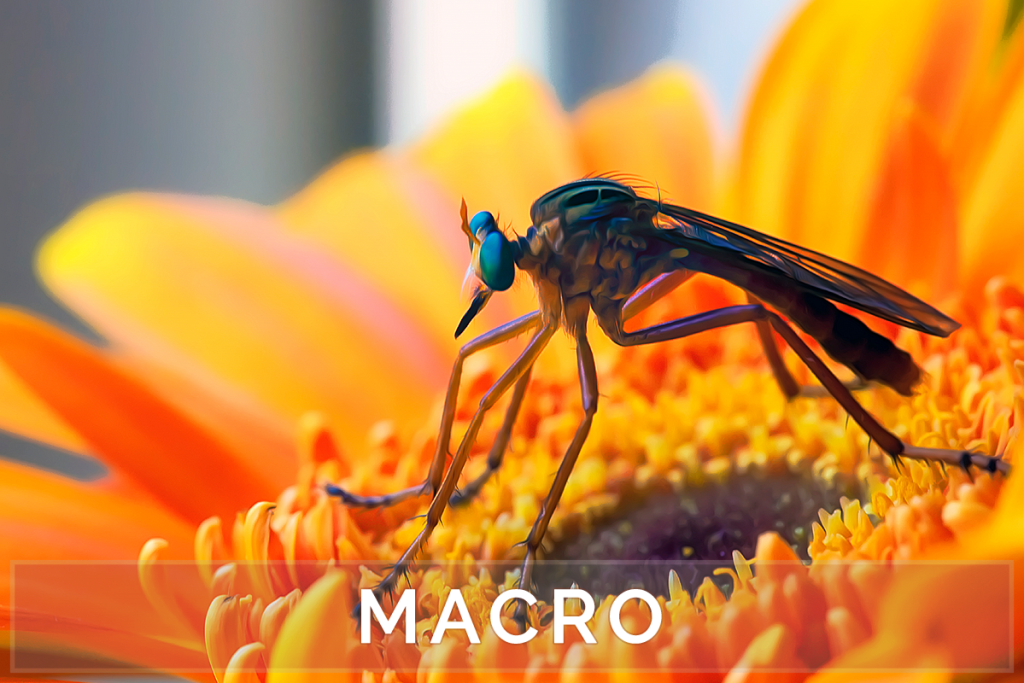 Macro Art and Photos - Macro Photography