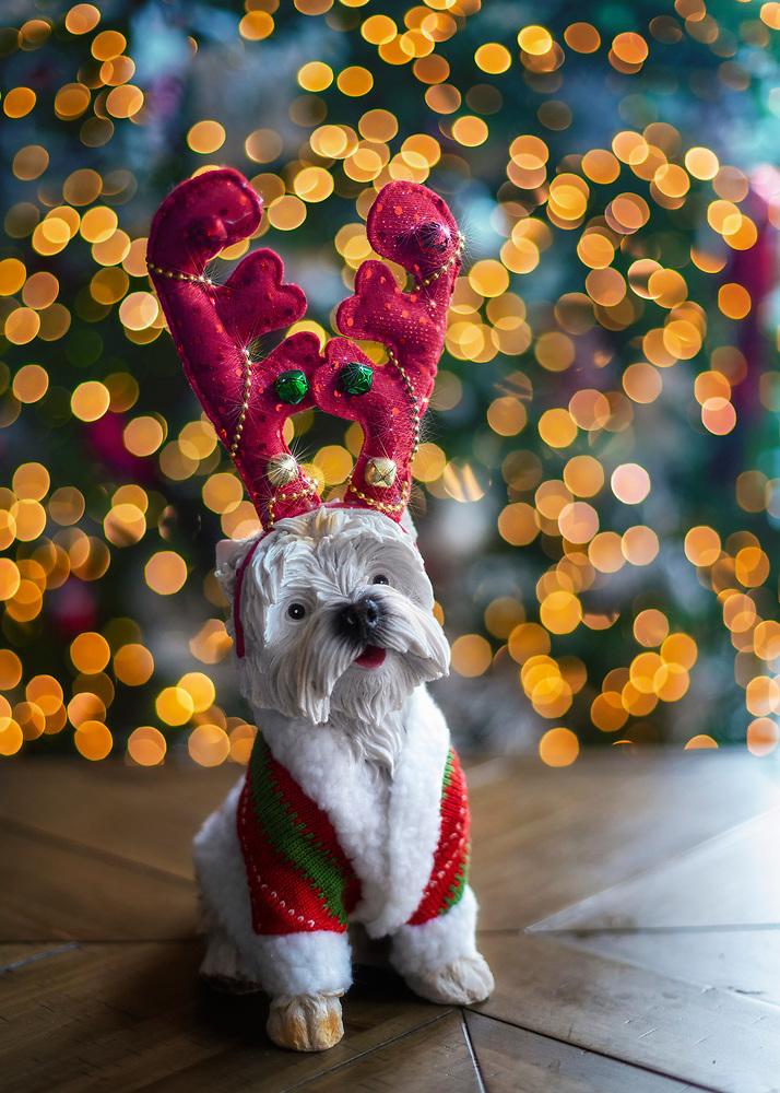 Christmas Doggy Decoration with Tree Lighting