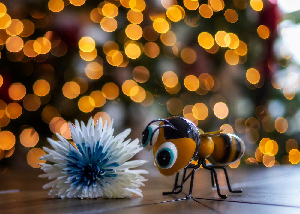 The Bee The Flower The Bokeh