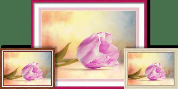 A single violet tulip surrenders unto the surrounding temperate vibrancy