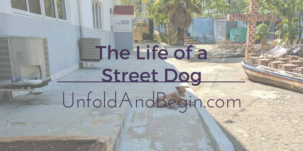 The Life Of A Street Dog Creativity Prompt
