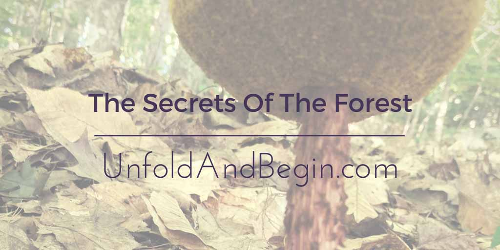 The Secrets Of The Forest Creativity Prompt
