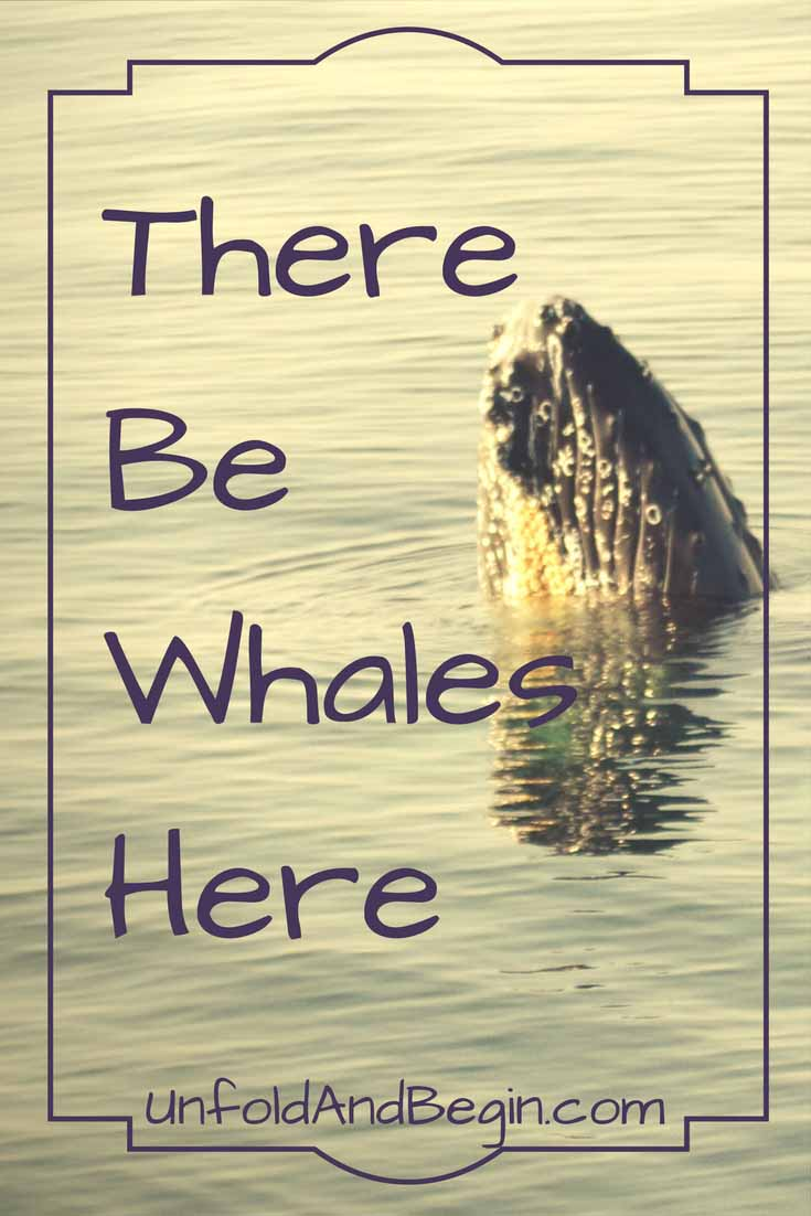 There be whales here could be exclaimed as we enjoyed a whale watch in Plymouth, MA.  Rewinding an old experience to make it new again on UnfoldAndBegin.com