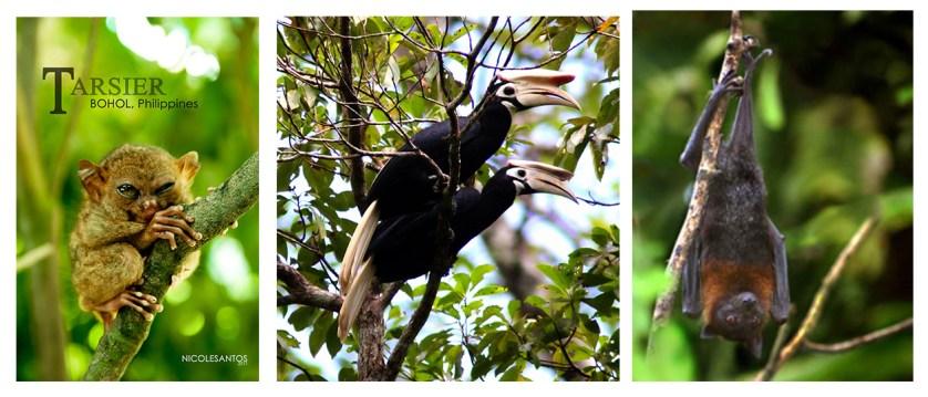 Tarsier, Palawan Hornbill, Mindanao Pygmy Fruit Bat