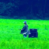 "Sneak peek audio clip for Official English ver. of Kimi No Nawa's theme song ""Zenzenzense"""