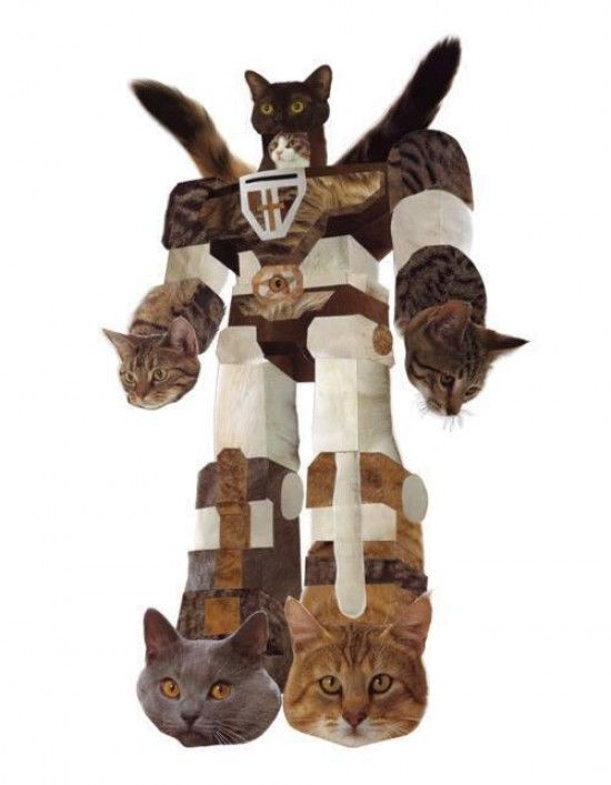 gatobot