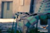 Pietragalla-Ugib-020411-0004