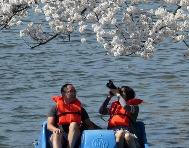 JEFF OLSON: National Cherry Blossom Festival, Part 2