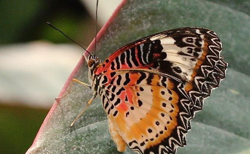 ERIC BERGESON: Photo Gallery — Botanical Beauty