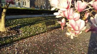 March15: Rawlins Park.