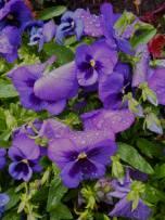 May 2: Inbetween showers flowers.