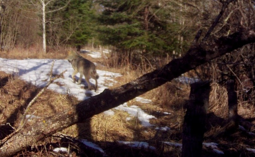 KEVIN GRINDE ― Rhythm Of The Trail: Critters Can't Escape This Trail Cam