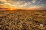 """August 5: """"Oh beautiful, for spacious skies, for amber waves of grain."""""""