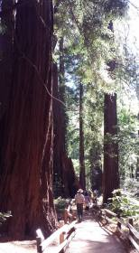 September 27: Strolling through Muir Woods with a park ranger.