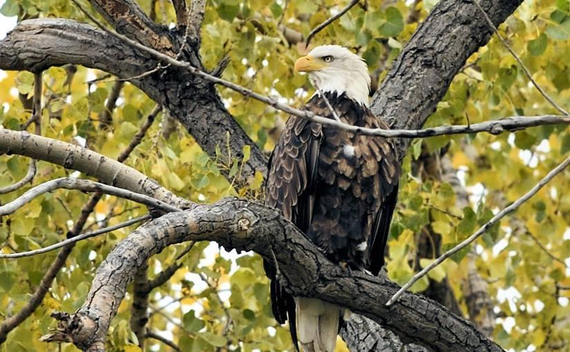 RUSS HONS: Photo Gallery — Bird Byway