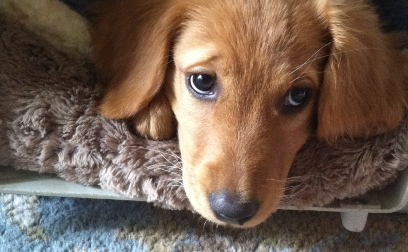JEFF TIEDEMAN: Straight From The Vest — The Perfect Puppy
