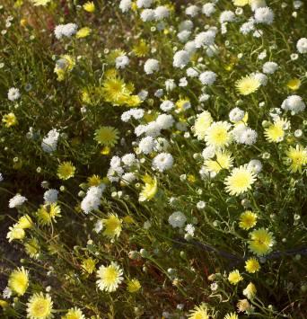 March 15: Desert blooms.