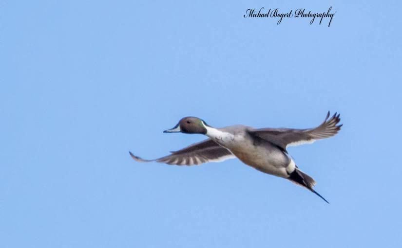 MICHAEL BOGERT: Photo Gallery — Wetlands Wonders