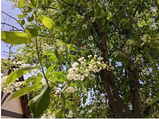 LILLIAN CROOK: WildDakotaWoman — The Fragrance Of The Day