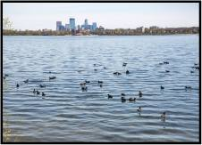 April 23: Another welcome sign of spring. Dorette Kerian and I made our first walk around Lake Calhoun in Minneapolis. It's part of one of the greatest urban park systems of America.