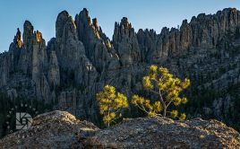 """The Cathedral Spires"" These are very pronounced rock formations along the Needles highway. I used these small evergreen trees growing out of a crack in this large rock as a foreground subject in this image at sunrise."
