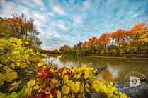 """Fall Colors Collage"": The morning sunrise had just hit the tops of the trees on the opposite bank in this image. The interesting and colorful vines over this log made a nice foreground."