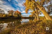 """Fall Scene Along the Banks of the The Red River"": I liked this scene showing this path covered in the fall leaves, and the trees along the Red River in full color."