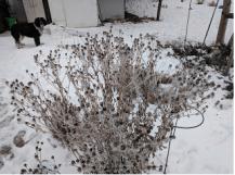 Screen Shot 2018-01-23 at 10.35.01 AM