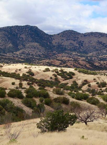 North of Sonoita, Ariz., are a lot of ranches. The elevation is over 4,500 feet, hence no saguaro.