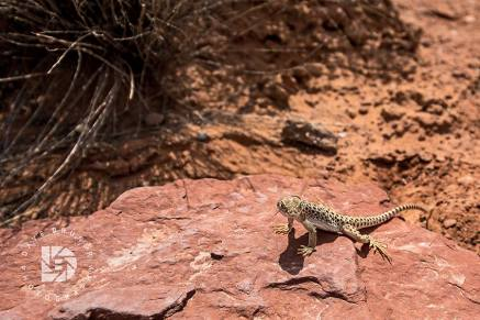 Most of these lizards would scurry away but this guy wanted his photo taken. I think he wanted to be in the next TV commercial.