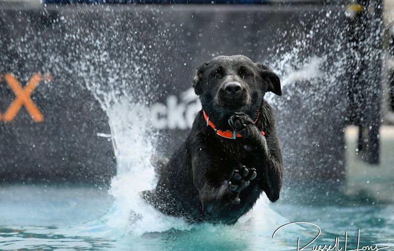 RUSS HONS: Photo Gallery — DockDogs
