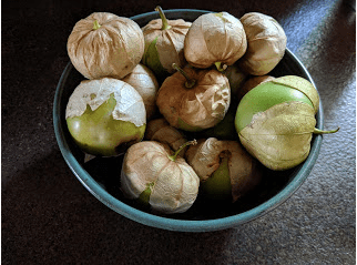 A gift of tomatillos from my sister.