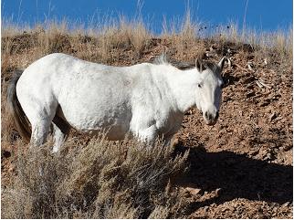 Photo by Chelsea Sorenson, Wild Dakota Photos.