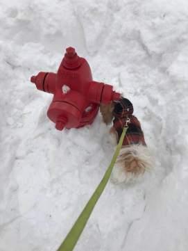 A Minnesota dog's best friend.