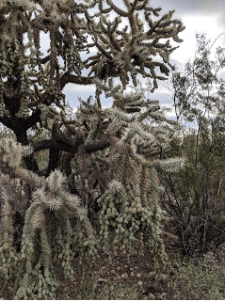 The cacti are endlessly fascinating.